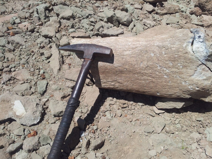 Fêmur de Titanossauro de 80 milhões de anos é encontrado por pesquisadores em Uberaba
