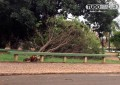 Chuva forte causa estragos em Capinópolis