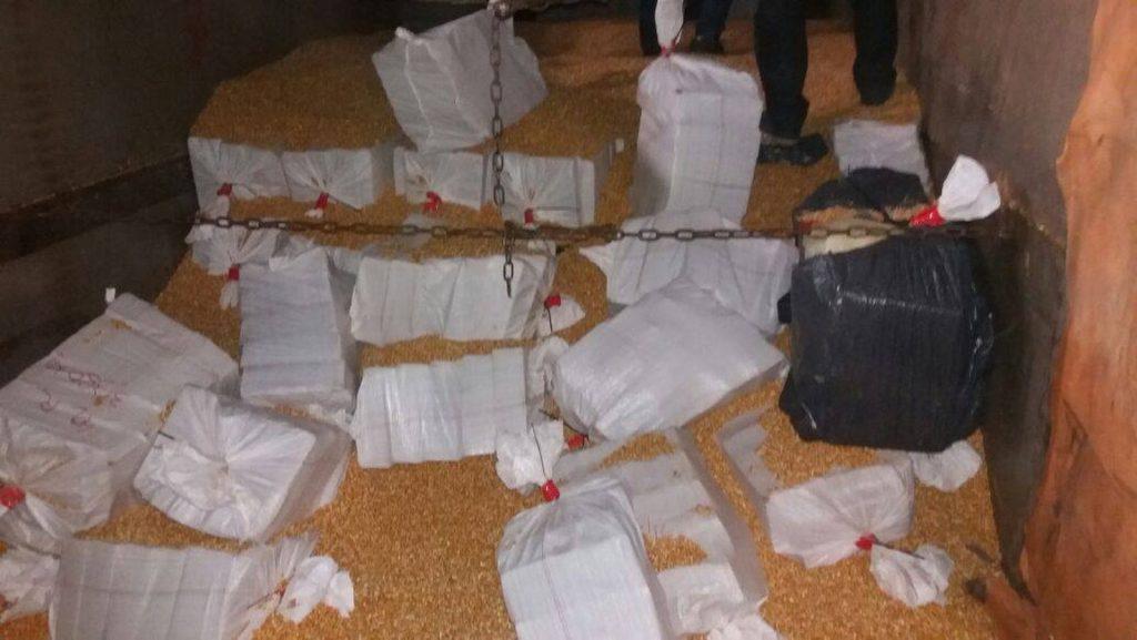 Maconha estava no meio de carga de milho em caminhão (Foto: Polícia Federal/Divulgação)