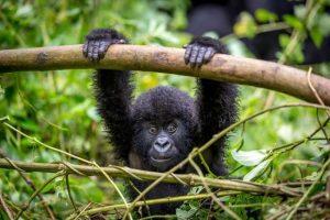 Primeiro parque nacional da África sofre com o desenvolvimento descontrolado