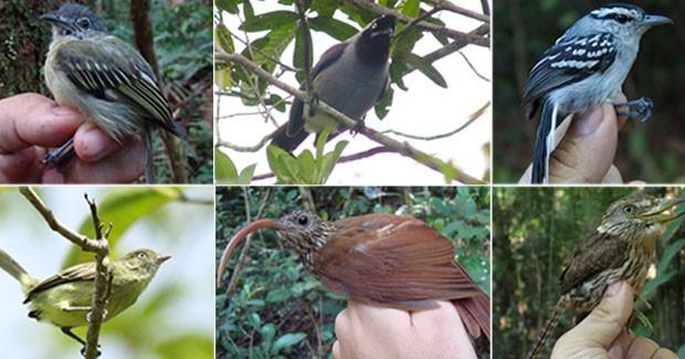 novas_aves_amazonia