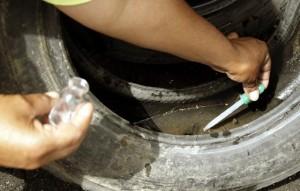Agente colhe amostra de água em pneu velho