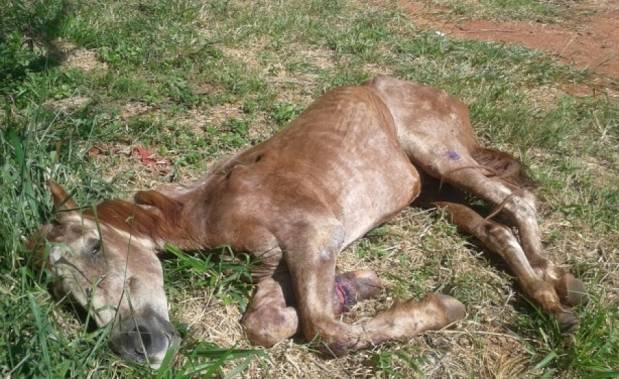 Policiais encontraram o cavalo quase sem forças, deitado em um terreno vago.
