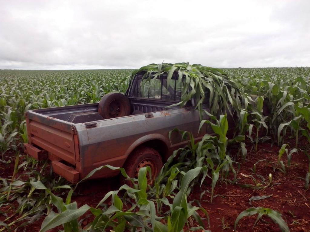 Carro foi encontrado camuflado em um milharal