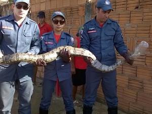 Animal foi capturado próximo a uma casa (Foto: Corpo de Bombeiros)
