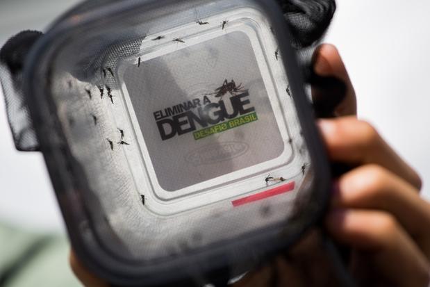Instituto Butantã afirma que vacina contra dengue pode estar disponível em 2016