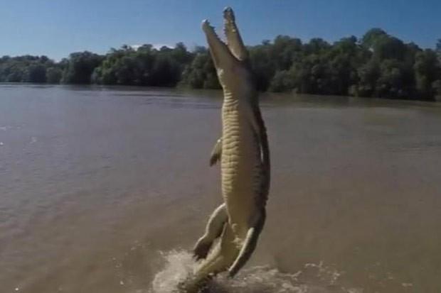 Vídeo incrível mostra crocodilo saltando quase que totalmente fora da água (Foto: Reprodução/ Instagram/Trevor Frost)