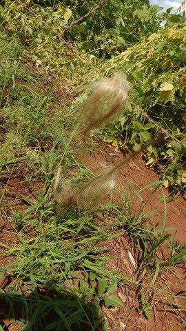 Mechas de cabelo, supostamente, da vítima ficaram presas ao arrame farpado