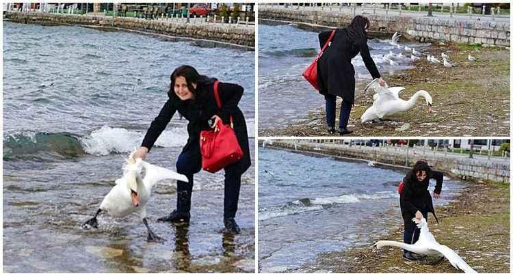 Após conseguir fazer a foto, a mulher largou o cisne à beira do lago e foi embora