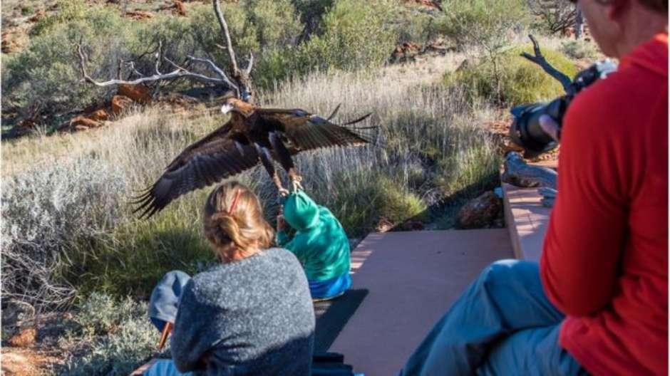 Águia teria levantado menino do chão, segundo relatos Foto: Christine O'Connell/Instagram: 55chris / BBCBrasil.com