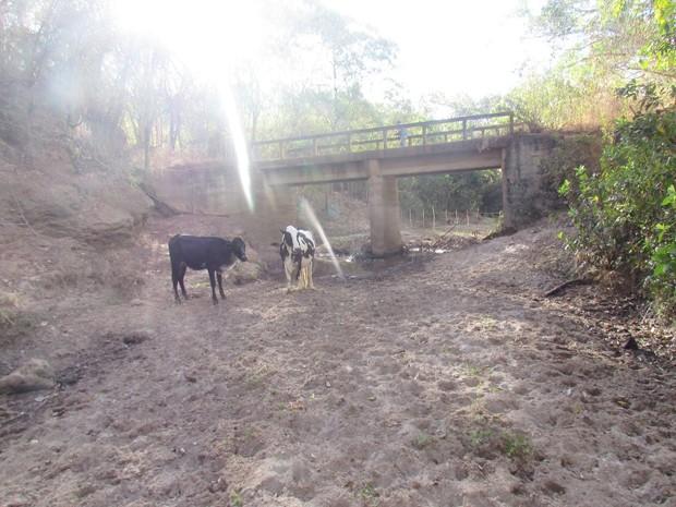 Local onde aparece o gado já foi um curso d'água que abasteceia a comunidade de Galena; local está seco há cinco meses (Foto: Defesa Civil/ Divulgação)