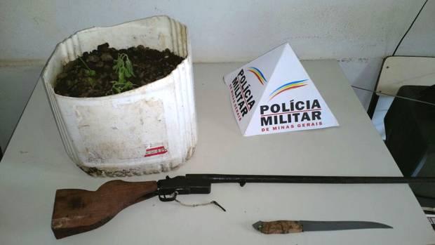 Armas apreendidas pela PM - Um pé de maconha, em tamanho pequeno, também foi apreendido