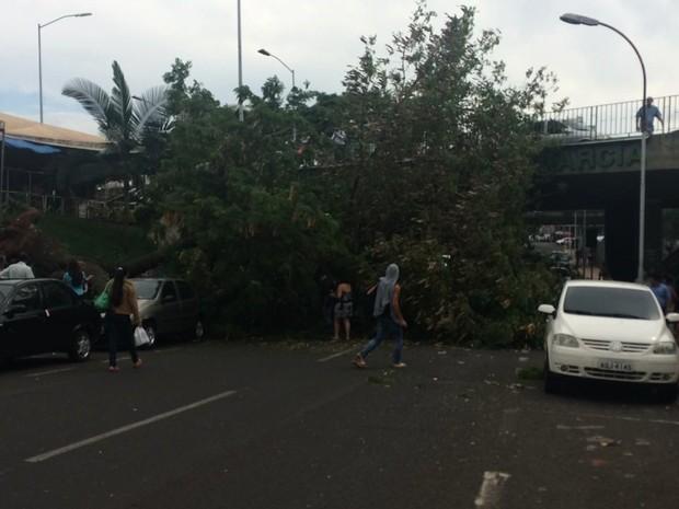 Veículos foram atingidos com a queda da árvore (Foto: Daniela Peixoto/Arquivo pessoal)
