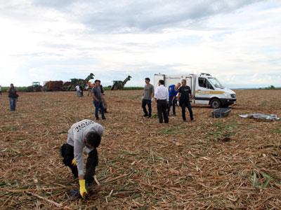 Peritos da Polícia Civil recolhem partes do corpo que foi triturado por máquina colheitadeira em canavial próximo ao Chuá