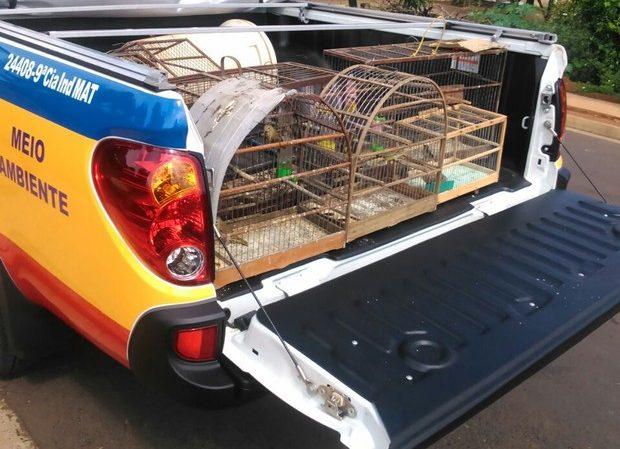 Pássaros eram mantidos em gaiolas (Foto: Polícia de Meio Ambiente/Divulgação)