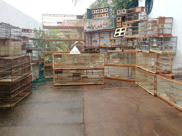 Mais de 100 pássaros e várias gaiolas foram apreendidas em Santa Vitória (Foto: PM Meio Ambiente/Divulgação)