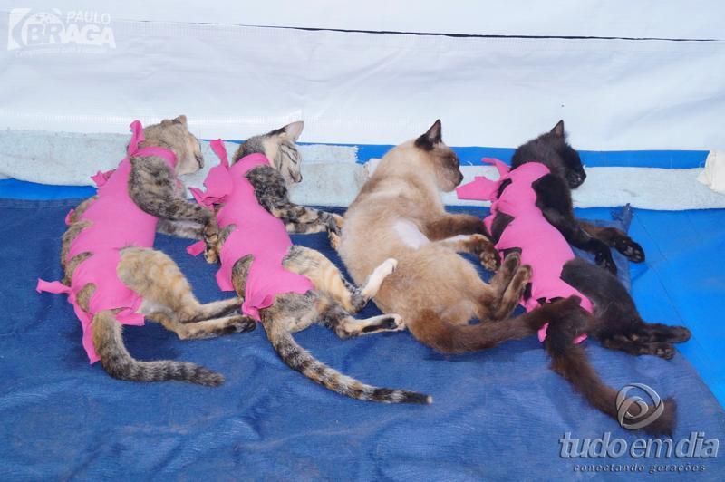 Animais repousam após procedimento cirúrgico de castração