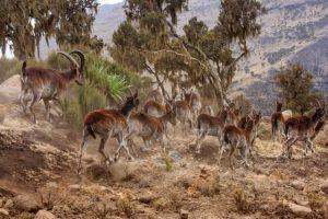 Grande acúmulo de gado prejudica a fauna e a flora locais