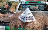 Redes e tarrafas foram apreendidas em posse dos pescadores (foto: PMA/divulgação)