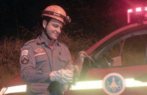 Curicaca resgatada pelos Bombeiros (Fotos: Bombeiros/Divulgação)