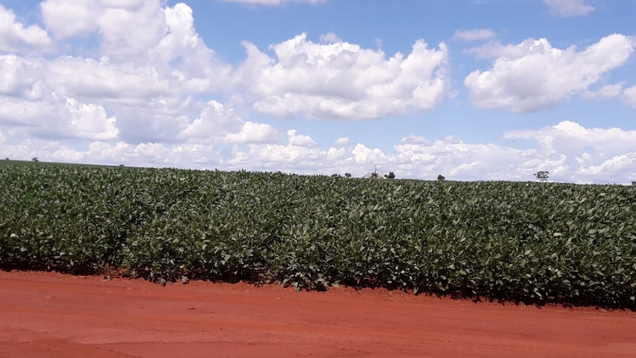 Lavoura de soja não tem a devida licença ambiental e produtor rural foi autuado pela PMA (Foto: PMA/Divulgação)