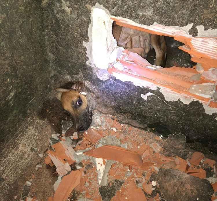 Animal ficou preso em cano de escoamento de água instalado no muro (Foto: Bombeiros/Divulgação)