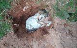 Dono quase enterra cão vivo em São Roque — Foto: Polícia Militar/Divulgação