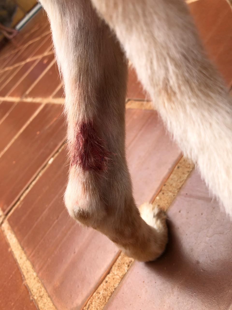Animal fico preso à corrente e teve a pata perfurada (Foto: Bombeiros/Divulgação)