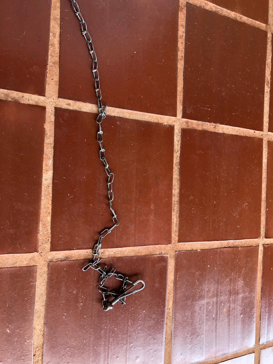Corrente utilizada como coleira perfurou a pata do animal (Foto: Bombeiros/Divulgação)