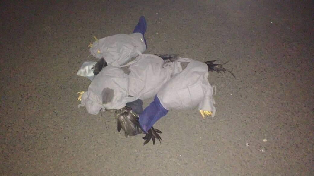 Aves foram soltas no meio ambiente (Foto: PMA/Divulgação)