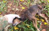Animal foi morto, possivelmente, à facadas (Foto: PMA/Divulgação)
