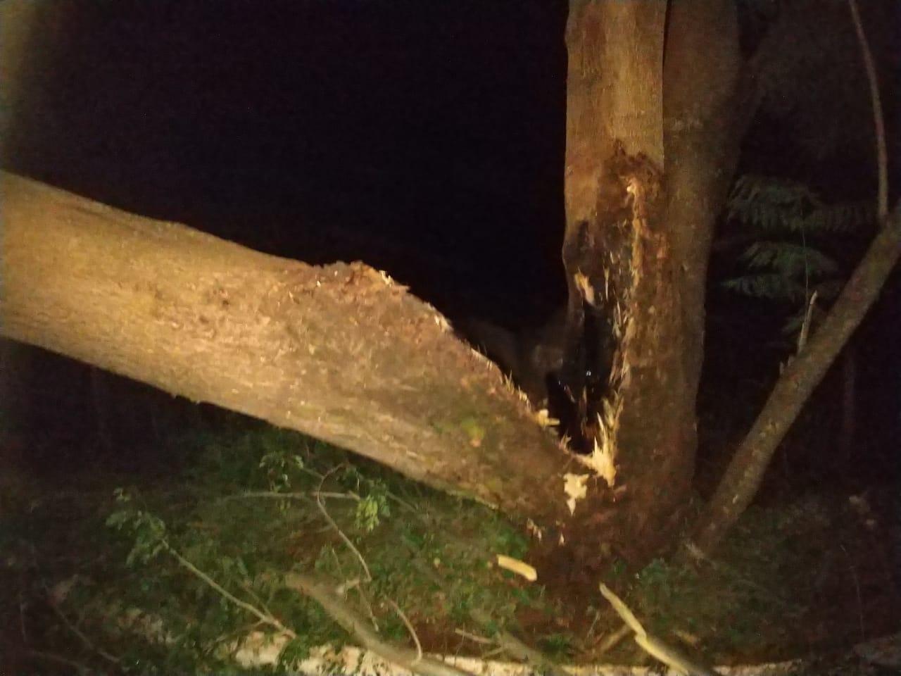 Queda da árvore interrompeu o tráfego na MGC-154, entre Capinópolis e Cachoeira Dourada (Foto: Bombeiros/Divulgação)