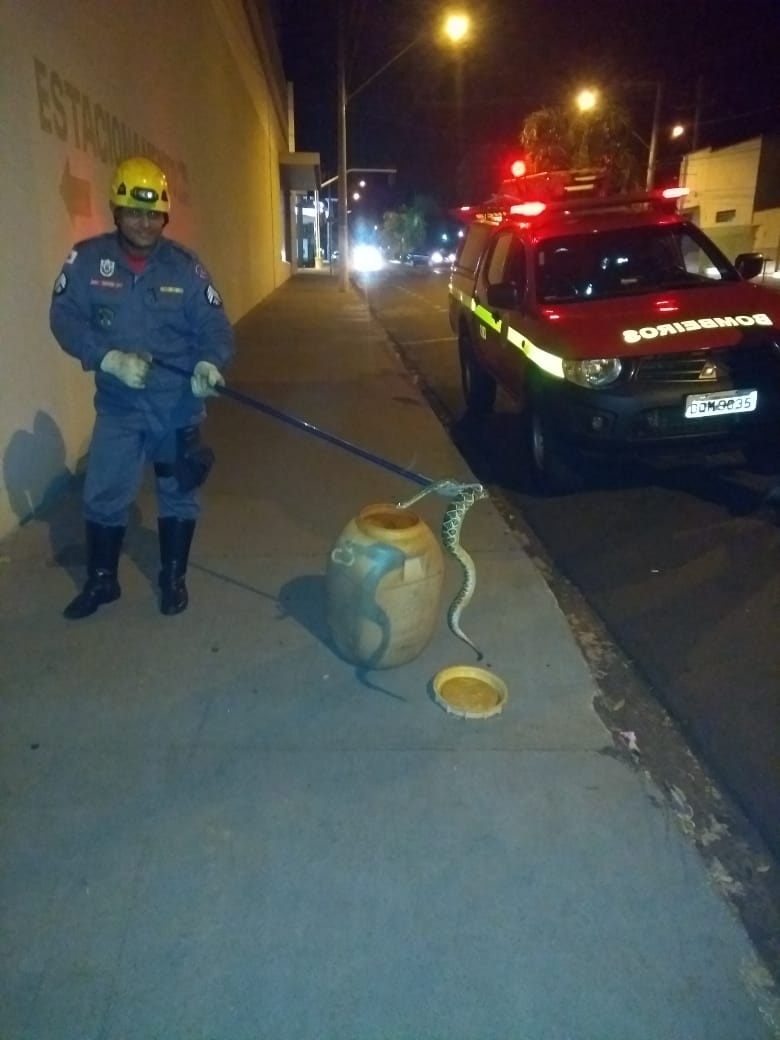 Cobra foi capturada no Centro comercial de Ituiutaba (Foto: Bombeiros/Divulgação)
