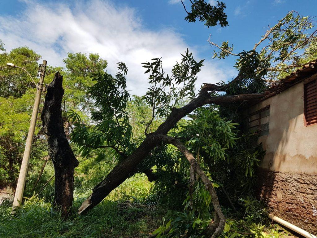 Telhado ficou danificado com a queda da árvore (Foto: Bombeiros/Divulgação)