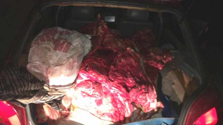 Carne bovina foi encontrada na porta-malas do carro