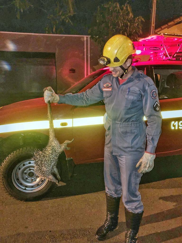 Bombeiro segura o animal, que foi solto em local adequado (Foto: Bombeiros/Divulgação)