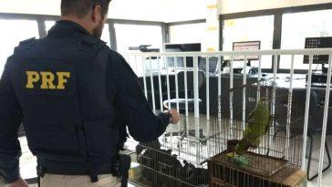 Policial faz vistoria nas aves apreendidas (Foto: PRF/Paracatu)
