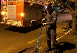 Bombeiro capturou animal (Foto: Bombeiros/Divulgação)