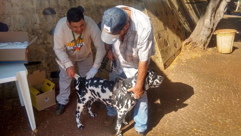 Animal é vacinado na Praça João Moreira de Souza (Foto: Divulgação)