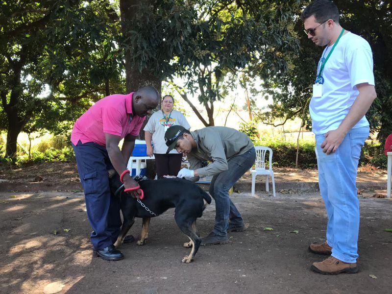 Animal é vacinado contra a raiva (Foto: Divulgação)
