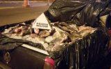 Pescado não tinha origem declarada e foi apreendido (Foto: PMA/Divulgação)