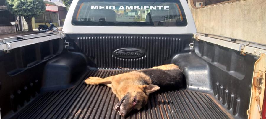 O animal foi resgatado em estado grave e levado a uma clínica da cidade (Foto: PMA/Divulgação)