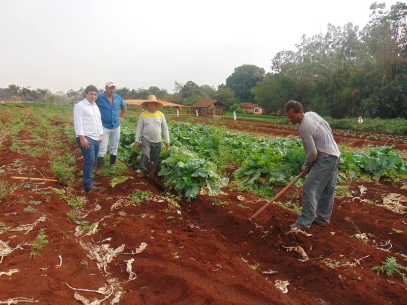 Produção de verduras e legumes abastece escolas da rede municipal de ensino e famílias de baixa renda cadastradas na Secretaria de Desenvolvimento Social em Capinópolis