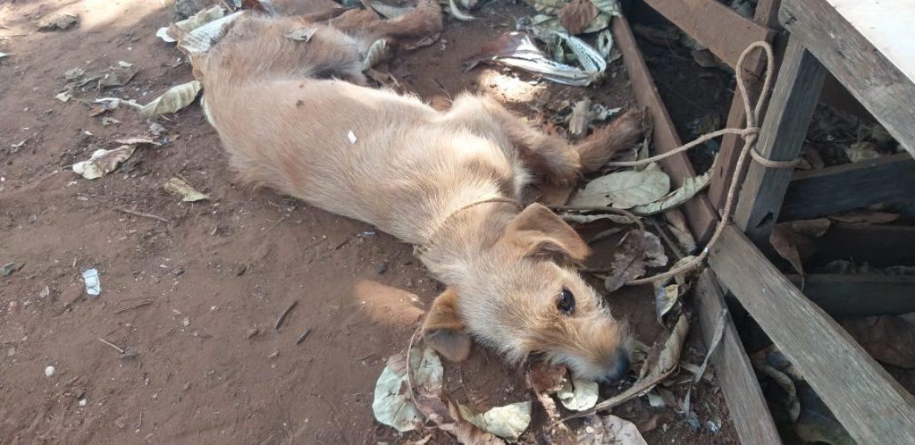 'Chimbinha' foi socorrido pelos militares ambientais (Foto: PMA/Divulgação)