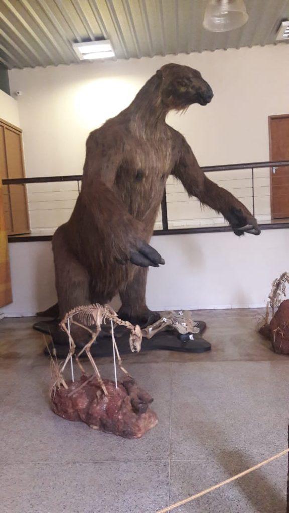 Preguiça gigante que habitava a região foi extinta há milhões de anos (Foto: Escola Governador Juscelino)