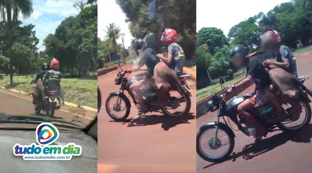 Animal furtado e abatido foi transportado em uma motocicleta (Foto: Reprodução)