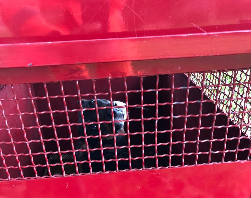 Animal foi acondicionado em uma gaiola (Foto: Bombeiros/Divulgação)