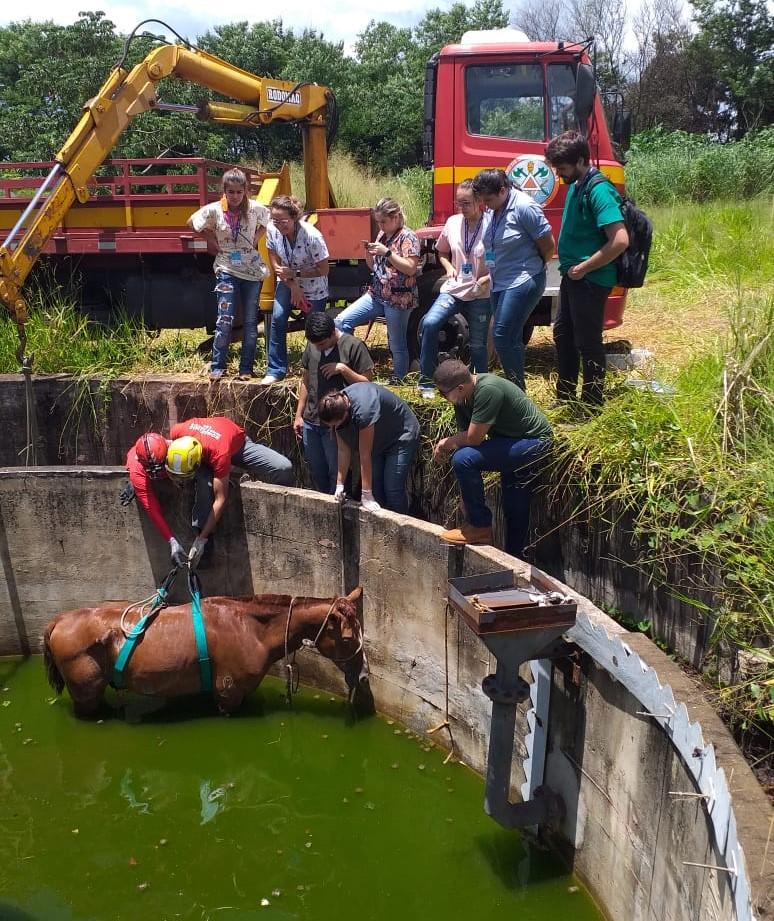 Animal foi resgatado após envolvimento de muitos profissionais (Foto: Bombeiros/Divulgação)