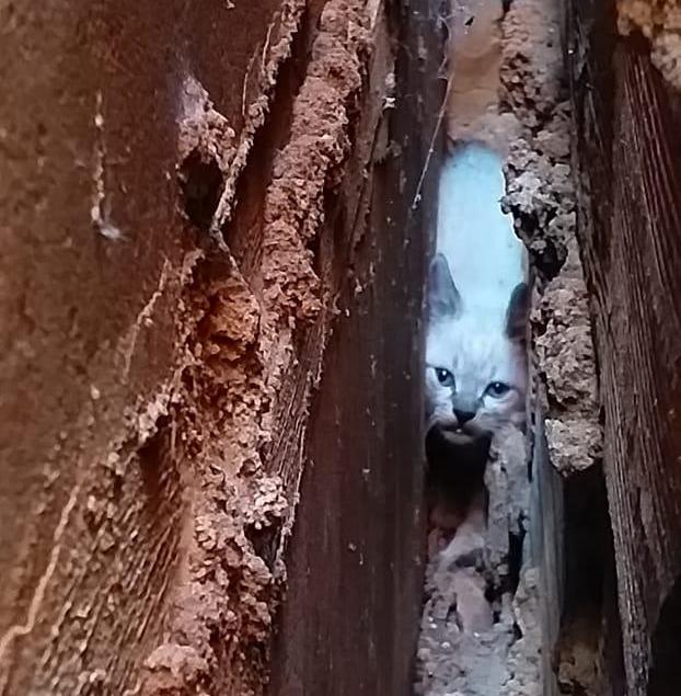 Animal ficou preso entre dois muros (Foto: Bombeiros/Divulgação)