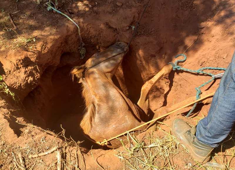 Animal caiu em uma cisterna desativada e estava exausto no momento do resgate (Foto: Bombeiros/Divulgação)